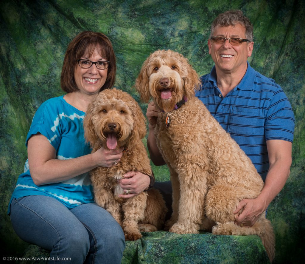 Our Story Leading To Our Love Of Australian Labradoodles