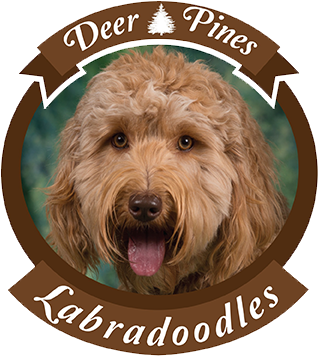 Deer Pines Labradoodles