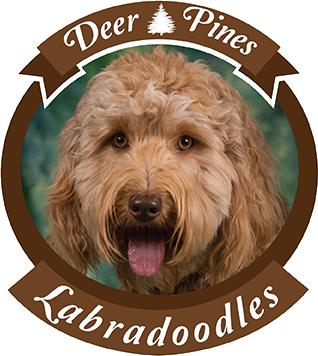 Deer Pines Labradoodles